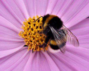 Bild på bi